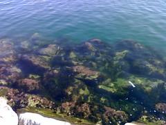 01102007239 (ivsuvan) Tags: fondo marino algas