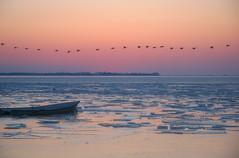 It's Cold! (Hulivili) Tags: ocean winter sunset sea ice birds landscape boat frozen flying pattern sweden freezing lonely nordic migration scandinavia skane skanor