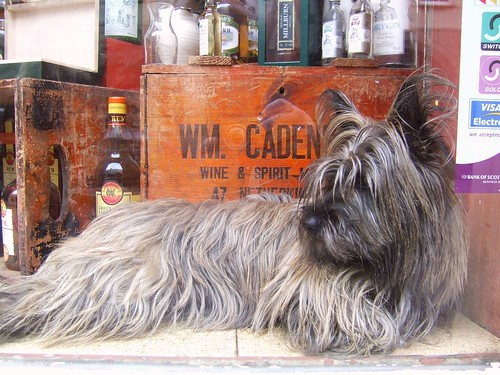Scotty dog in whisky shop by byronv2.