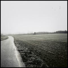 winterlandscape (stadtbild) Tags: winter true landscape vinter felder squareformat frame landschaft dänemark danmark radtour cykel quadrat fieldstudy tilst