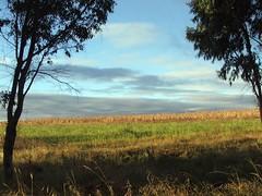 Campo invernal (Ricardo Gerardo Colin) Tags: mxico landscape paisaje campo quertaro encinillas encinillasedodemx polotitln ricardocolin wwwstudio22qrocom