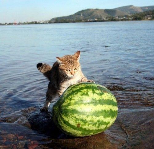 melon_20fishing