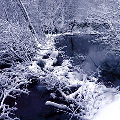 "Play Dead… Little Beavers… !!! (Denis Collette...!!!) Tags: winter snow canada bravo quebec dam hiver rivière damage neige björk barrage prudence beavers sauvage castors dommage firstquality visiongroup ""deniscollette"" «wildriver» world100f «playdead» «becareful» «faiteslemort» «soyezprudents» explorewinnersoftheworld vision100"