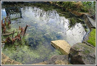 pond copy