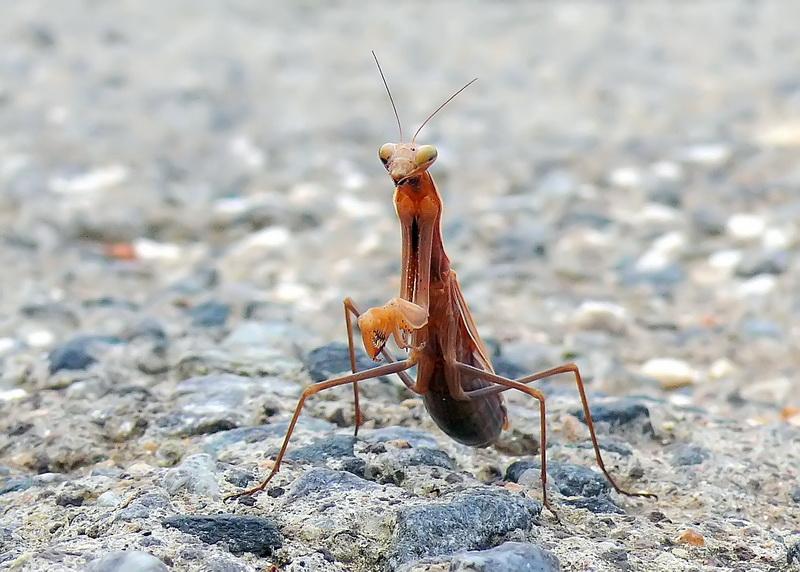 Quelques insectes sympathiques ... 2236051096_3342a64d99_o