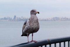 Bird in Sausalito