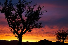 Rancho Bernardo Sunrise (goldenstatephoto) Tags: orange tree silhouette clouds sunrise purple sandiego ranchobernardo mountwoodson