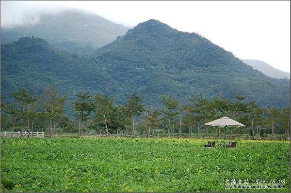 【遊記】台東喜宴行05鴕鳥奔之瑞穗牧場
