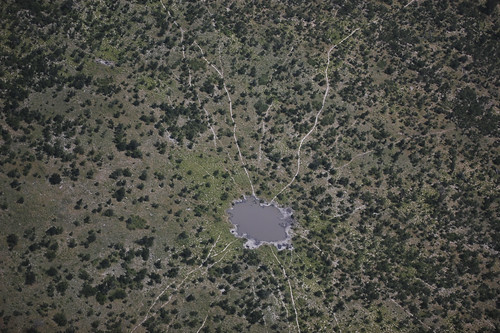 aerial view of trails leading to watering hole
