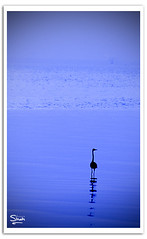 I Own The Sea (Hussain Shah.) Tags: sea bird d50 nikon alone sigma adobe lonely kuwait 70300mm own kuwaiti shah lightroom the hussain sulaibikhat i muwali