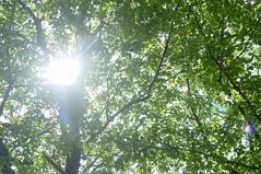 初夏の様な陽射し