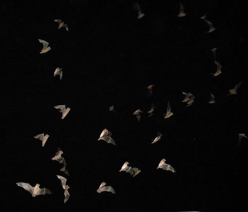 Bats4.jpg