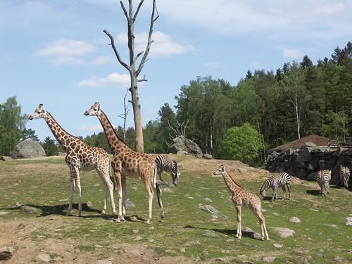 safari enclosure