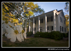 Dogwoods at Smith Plantation, Roswell, GA (MR MARK | photography) Tags: park city morning flower tree ga georgia spring roswell historic plantation bloom mansion dogwood dogwoods smithplantation