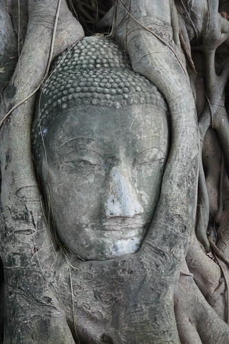 The Bodhi Tree: Ayutthaya, Thailand