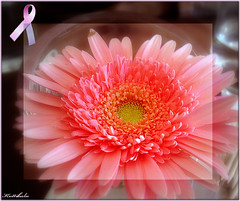 Mammography Day / Cancer Awareness (Raksh1tha) Tags: pink flower october picasa awareness breastcancer gerberas myfavoriteflower kuttibalu gimp24 postpink 19oct2007 nationalmammographyday wwwcancerorg thirdfridayofoctober