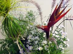 IMG_5072.JPG (theMaykazine) Tags: flowers plants ikebana flowerarrangement wafu japaneseflowerarrangement japaneseikebana wafuikebana