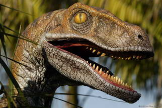 Velociraptor, as portrayed in the film Jurassic Park (Digital Images)