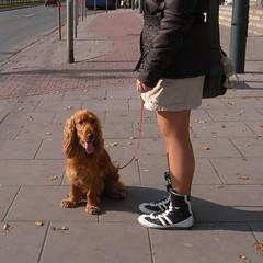 patient doggy in Nowa Huta, Krakow