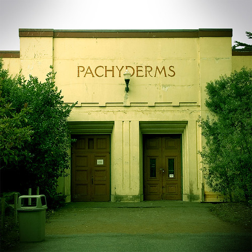 Pachyderms #4