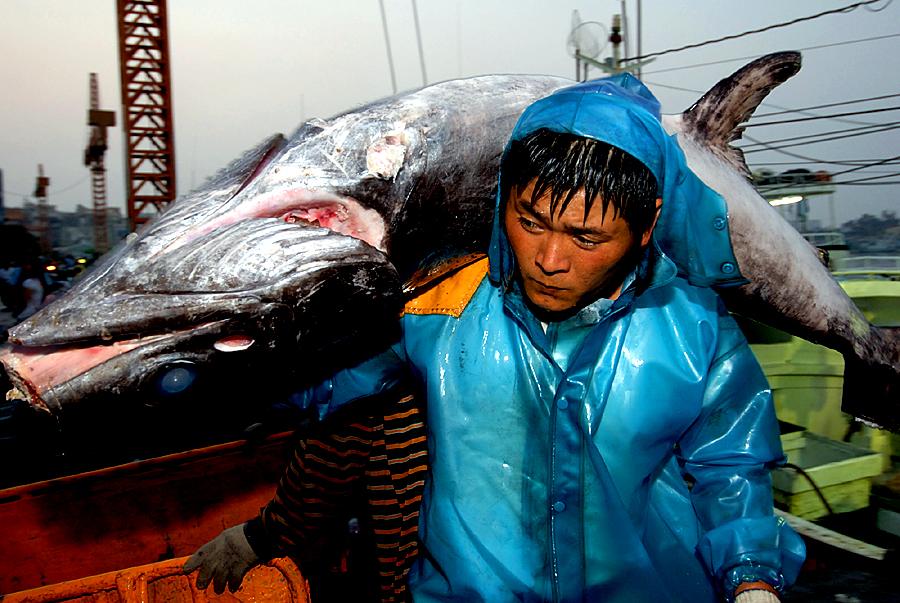 東港黑鮪魚3