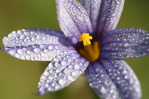 teeny tiny canyon flower with morning dew