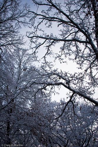 Winter Scene-2