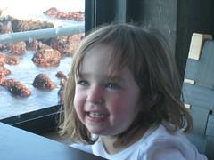 IMG_0833.JPG (joelaz) Tags: aquarium monterey acquarium