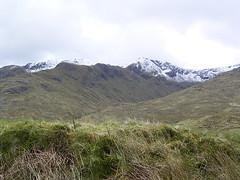 Cluanie Forest (Peat Bog) Tags: cape wrath glenfinnan