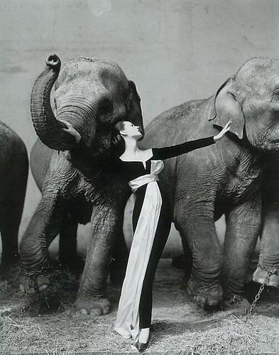 Dovina con elefantes