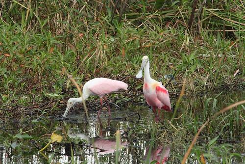 Bear Swamp & 75 birds 2-3-08 362
