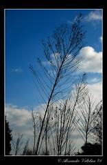 Albero (Alessandro Voltolina) Tags: blue winter sky tree clouds italia nuvole cielo albero inverno venezia distillery italians chioggia veneto brentariver nikond80 volto71 brondolo