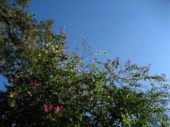 Saturday Sky 20080216 - 2
