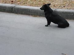 080218-1 a black dog