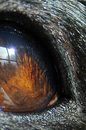 The eye of my dog Sammy