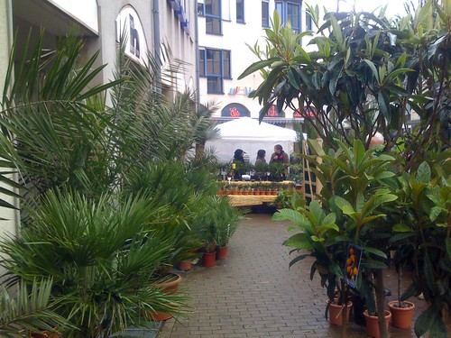 Palmenoase auf dem Bielefelder Altstadtfest