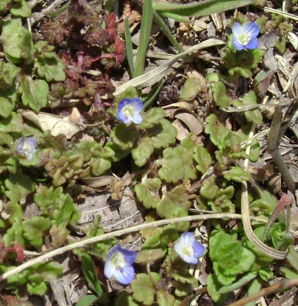 Mystery Spring Flowers