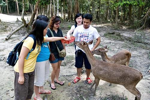 Deer Feeding at Deerland