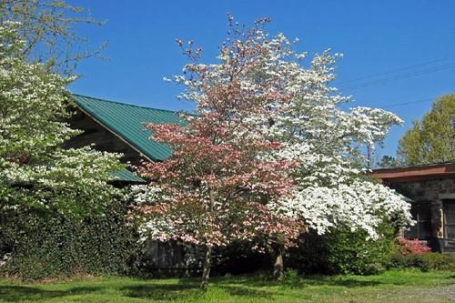 Spring In Mena 18