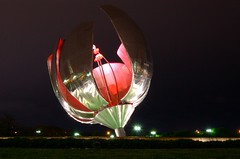 Floralis Generica by night - by blmurch