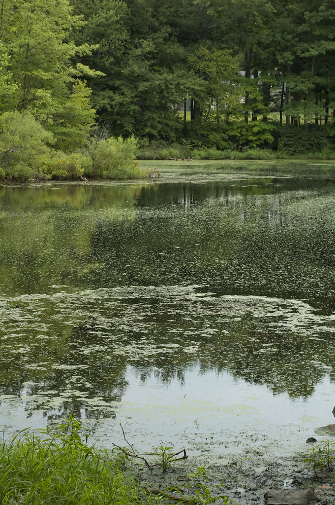 research papers eutrophication Environmental pollution is an international journal that seeks to publish papers that report results from original, novel research that addresses.