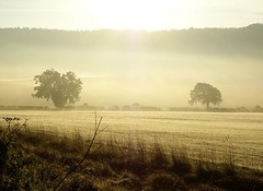 trees in the morning (algo) Tags: trees topv111 misty fog photography topf50 topv555 dew fields topf100 aphoto magicdonkey 200750plusfaves