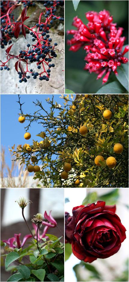 Flora del Palatinato