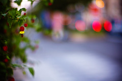 at the crossing of twilight (moaan) Tags: life leica red flower digital 50mm evening crossing dof bokeh dusk f10 m8 bloom flowering intersection noctilux dailylife hang redflower taillight 2007 twillight fortuity inbloom nationalroad ordinarylife route43 explored leicam8 leicanoctilux50mmf10 bokehwhores gettyimagesjapanq1 gettyimagesjapanq2