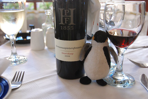 Mini Wolfgang samples the local wine at Hermanus!