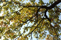 (Nicola Zuliani) Tags: autumn fall foglie alberi leaf natura leafs autunno colori valeggiosulmincio sigurt nizu nicolazuliani giardinodisigurt wwwnizuit