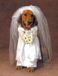 man_marries_female_dog