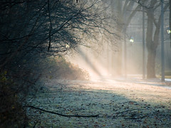 Morning Rays (Lloyd K. Barnes Photography) Tags: autumn trees light sun mist fall fog vancouver ubc rays soe sunbeams artisticexpression supershot interestingness363 i500 shieldofexcellence platinumphoto anawesomeshot lloydbarnes betterthangood explore20071128 lloydkbarnes