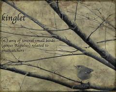 kinglet (mimbrava) Tags: interesting mimbrava dictionary 322 doi rubycrownedkinglet reguluscalendula kinglet featheryfriday artlibre flickrplatinum