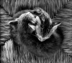 Cats (Ferran.) Tags: 2 cats cat gat gats thecatwhoturnedonandoff